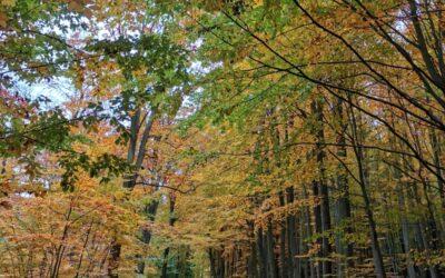 Voděradské bučiny – podzimní tip na výlet
